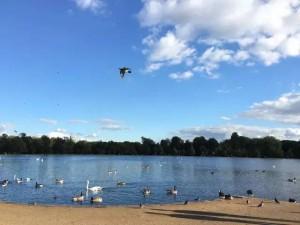 刘雨拍下的伦敦某公园即景