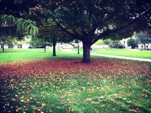 秋天的校园