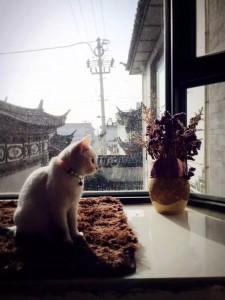 第一次去大理的时候住的客栈,后来带着猫搬到大理