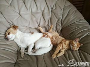 张春的狗和猫