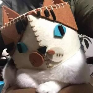 猫戴着pennycrane做的毛毡帽